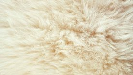 Bowron Sheepskins Longwool One and a Half Piece Champagne